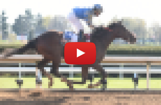 Belmont Stakes 2016 Longshots video 1 615x400
