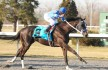 Black Onyx Captures the 2013 Spiral Stakes